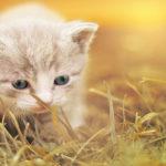 Behavior of cat