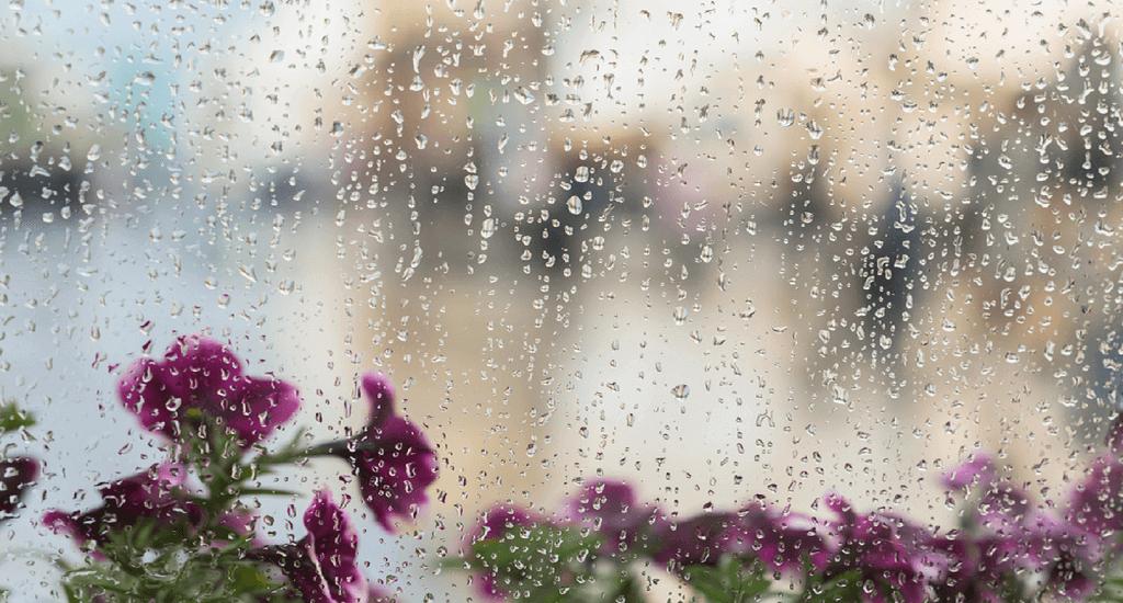 the rainy season essay