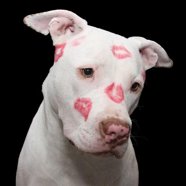 valentines day image 40