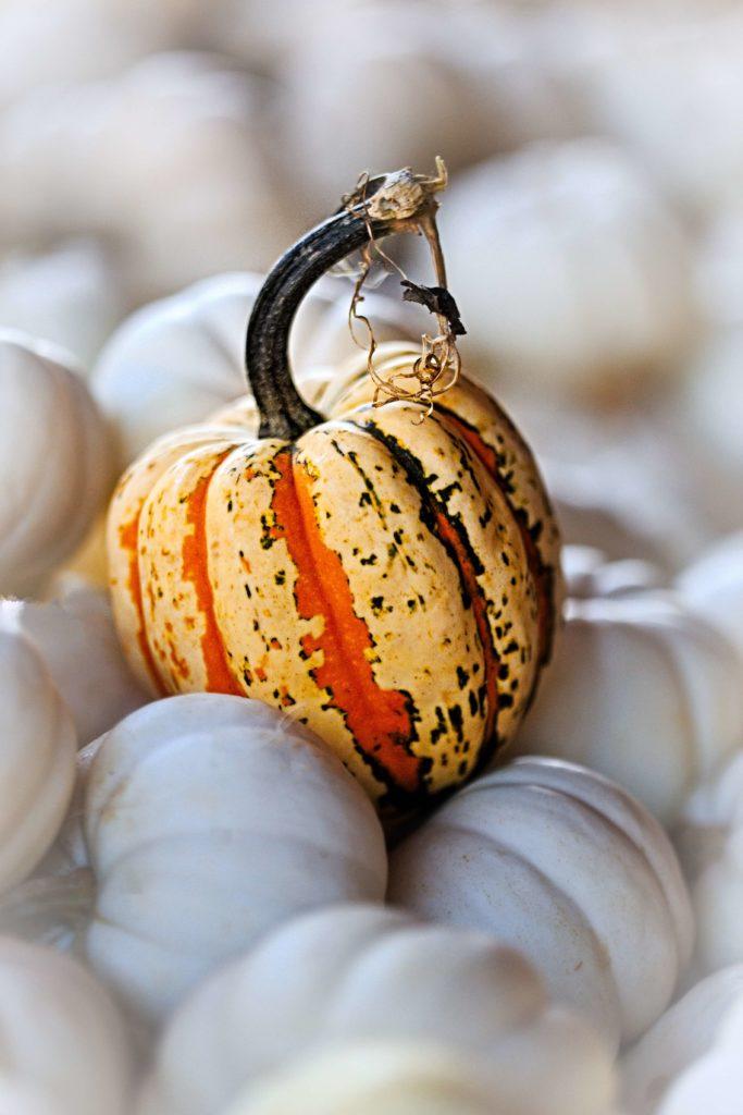 beautiful halloween pumpkin image