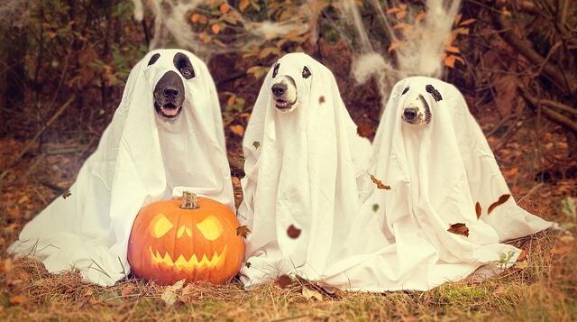 halloween caption