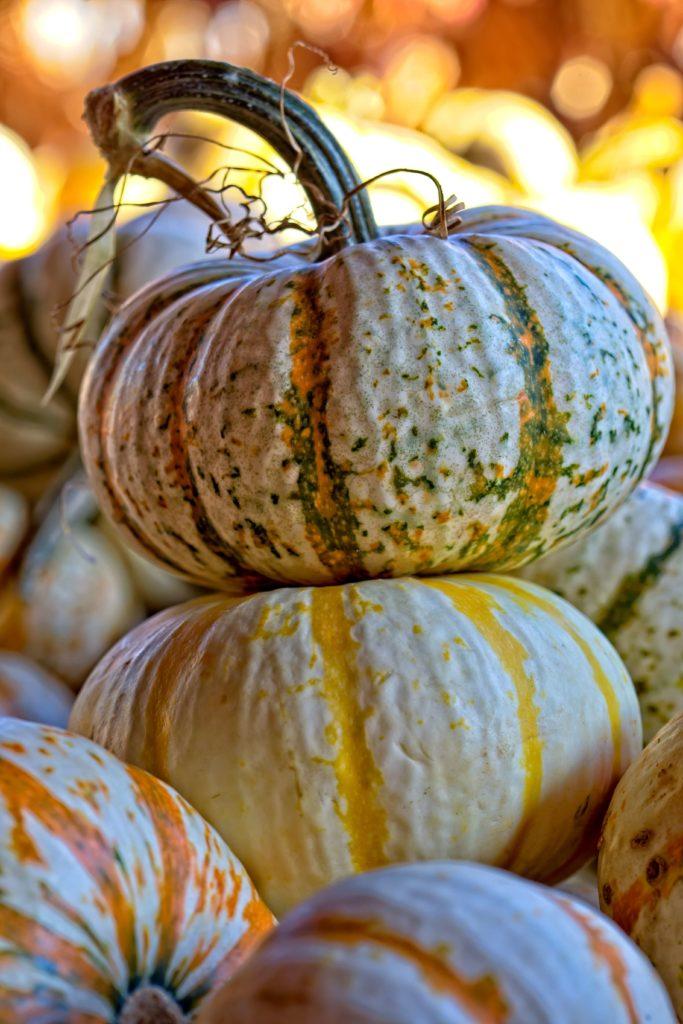halloween pumpkin image 2019 2