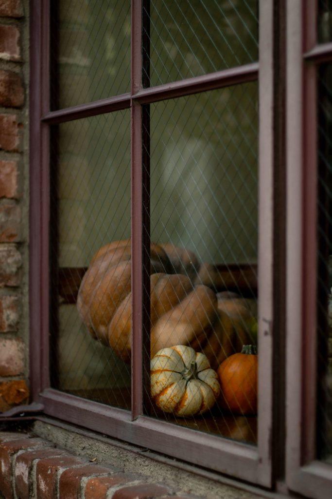 halloween pumpkin image 2019