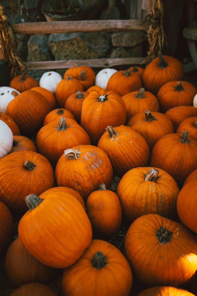 halloween pumpkin image lots