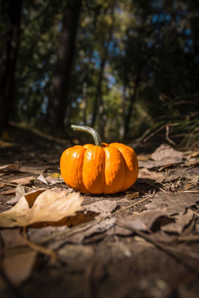 halloween pumpkin images in jungle