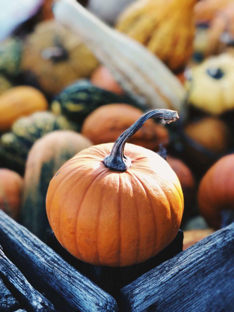 halloween pumpkin photos