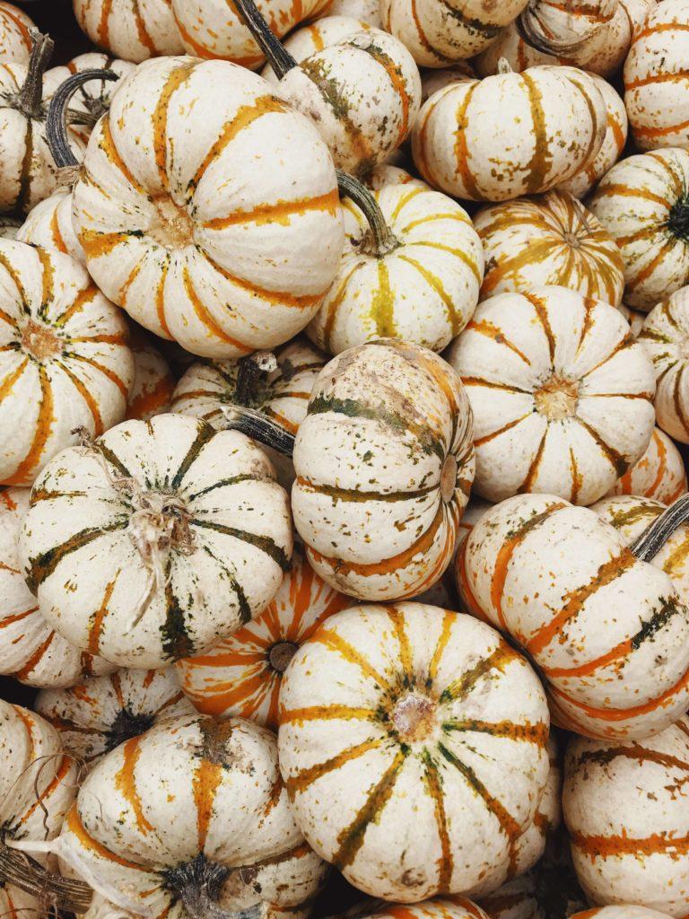 pretty halloweene pumpkin image