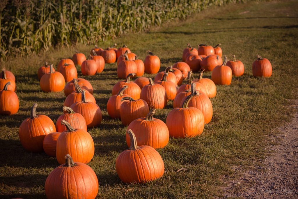 pumpkin images for halloween
