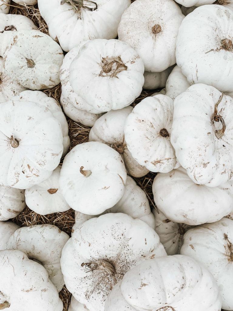 white halloween pumpkin image